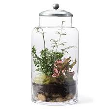 the estate of things chooses terrarium