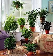 The use of houseplants dates