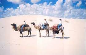 Camel riders in Monahans