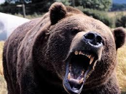 BrownBearroaring(Ursus