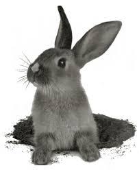 Je vends donc du lapin découpé et ...