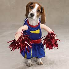 dog Halloween costumes and