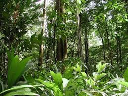 Endangered Rainforests