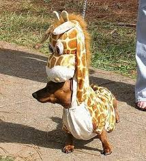 dogs in funny costumes.