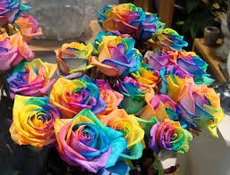 Rainbow roses are real roses,
