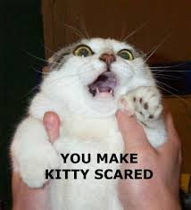 ... Pictures - You Make Kitty Scared